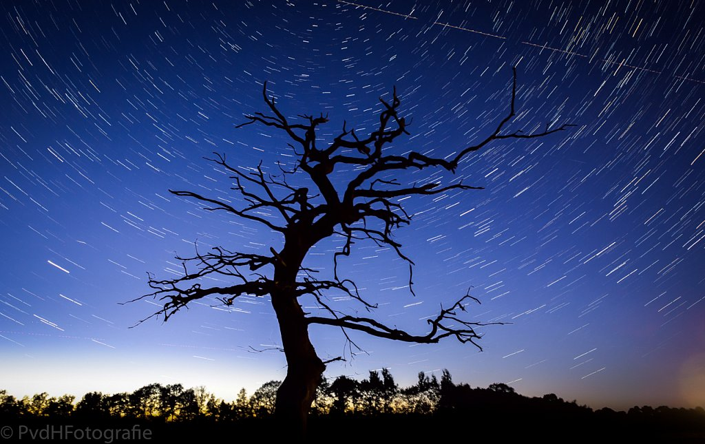 StarStaX-DSC0236-DSC0295-lighten.jpg